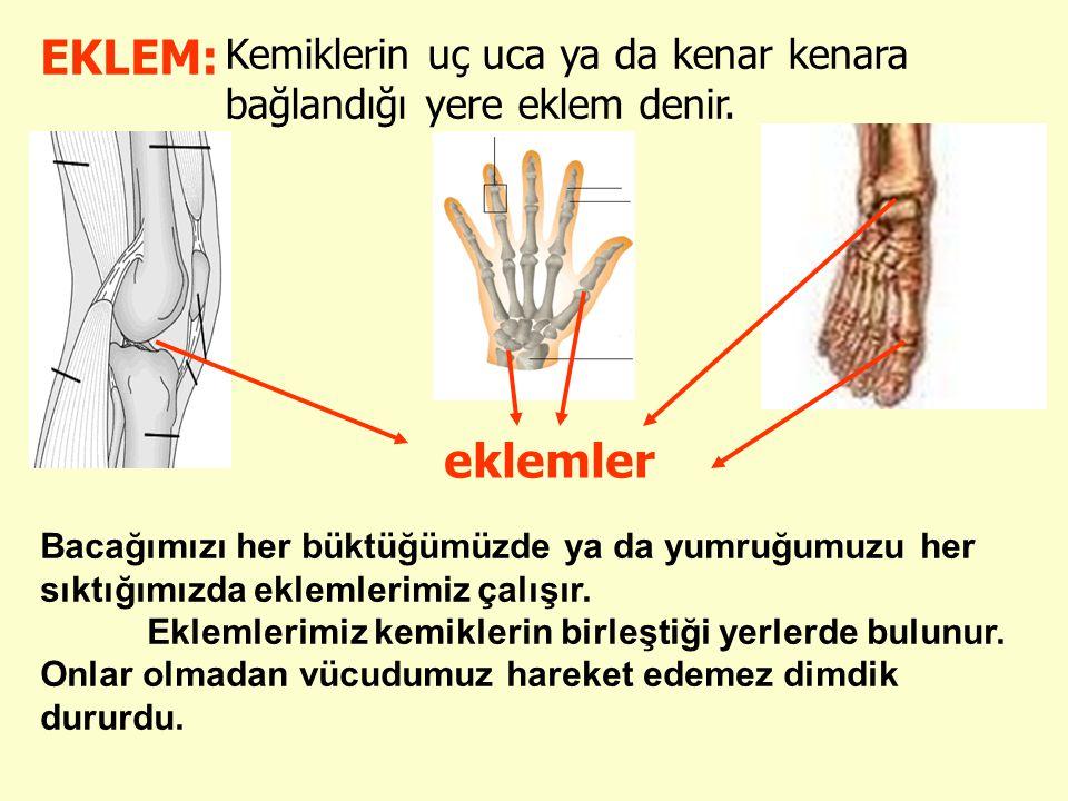 EKLEM: Kemiklerin uç uca ya da kenar kenara bağlandığı yere eklem denir. eklemler.