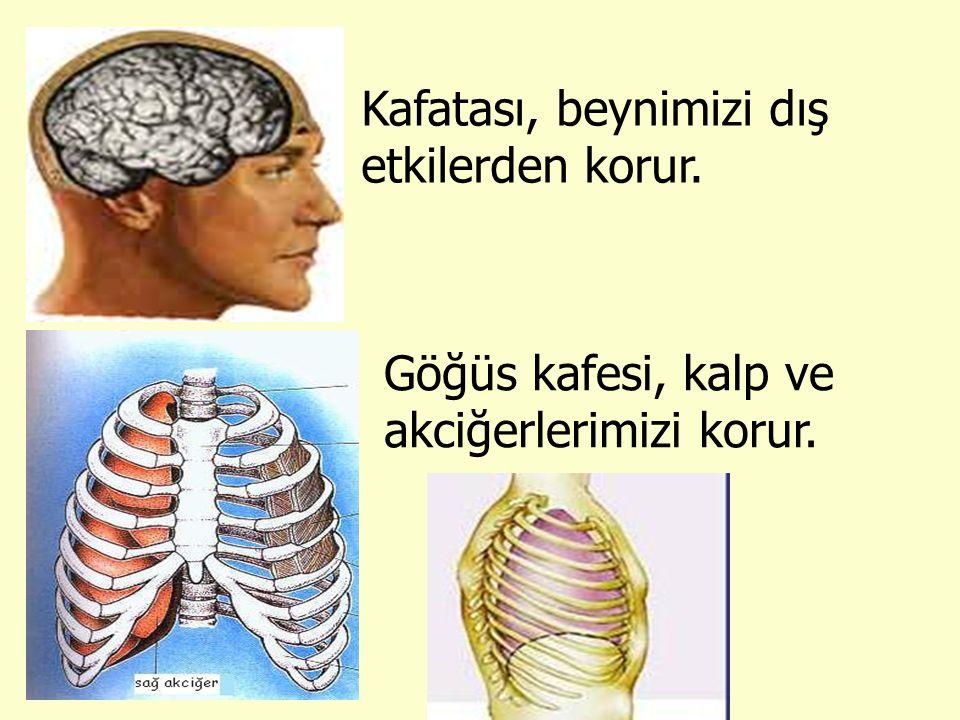 Kafatası, beynimizi dış etkilerden korur.