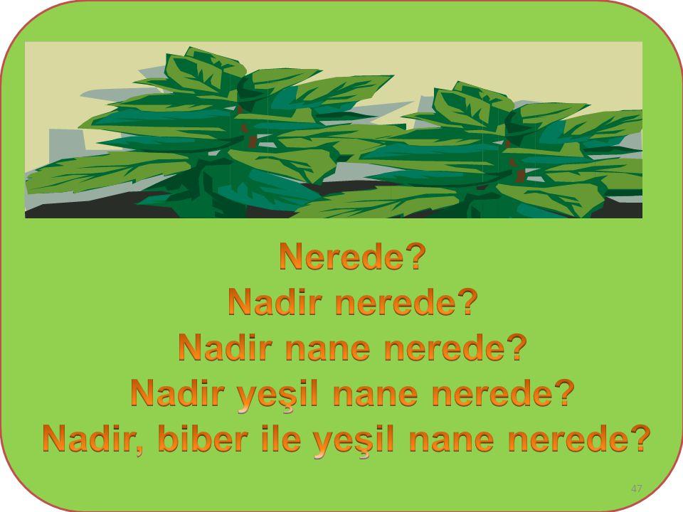 Nadir yeşil nane nerede Nadir, biber ile yeşil nane nerede