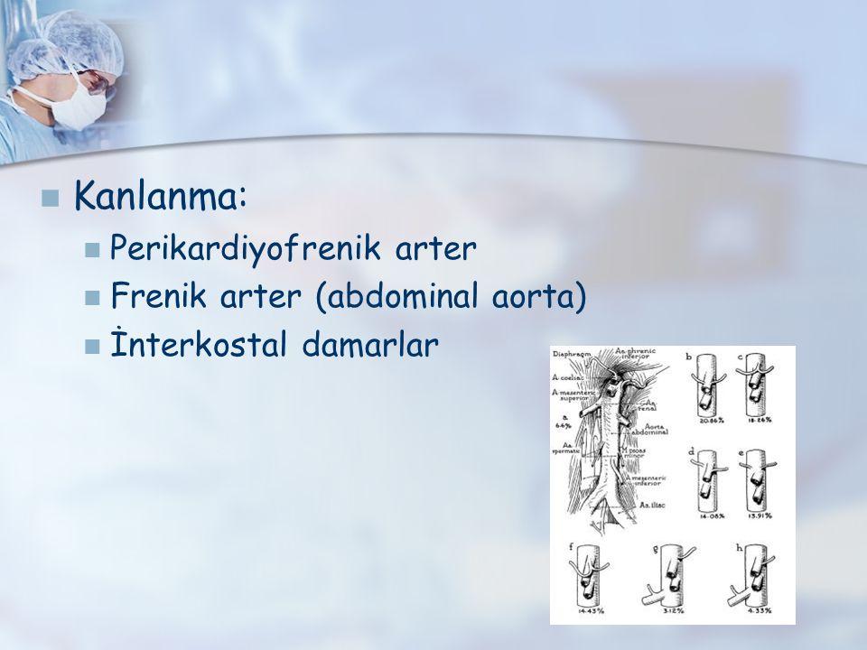 Kanlanma: Perikardiyofrenik arter Frenik arter (abdominal aorta)