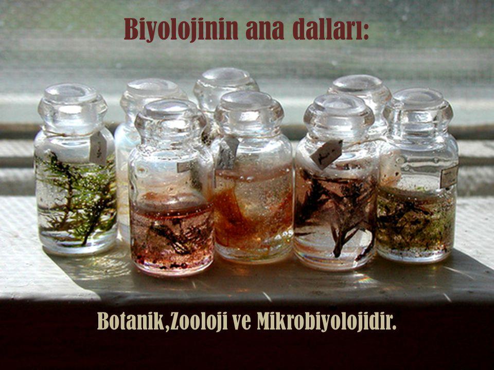 Biyolojinin ana dalları: