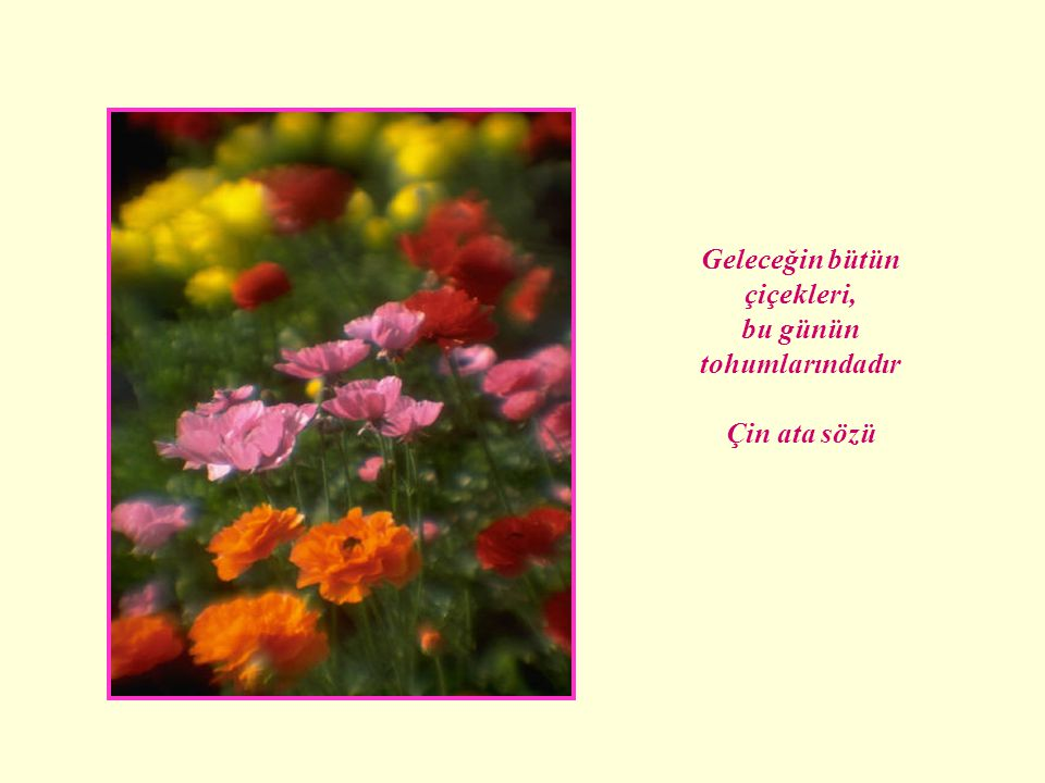 Geleceğin bütün çiçekleri, bu günün tohumlarındadır