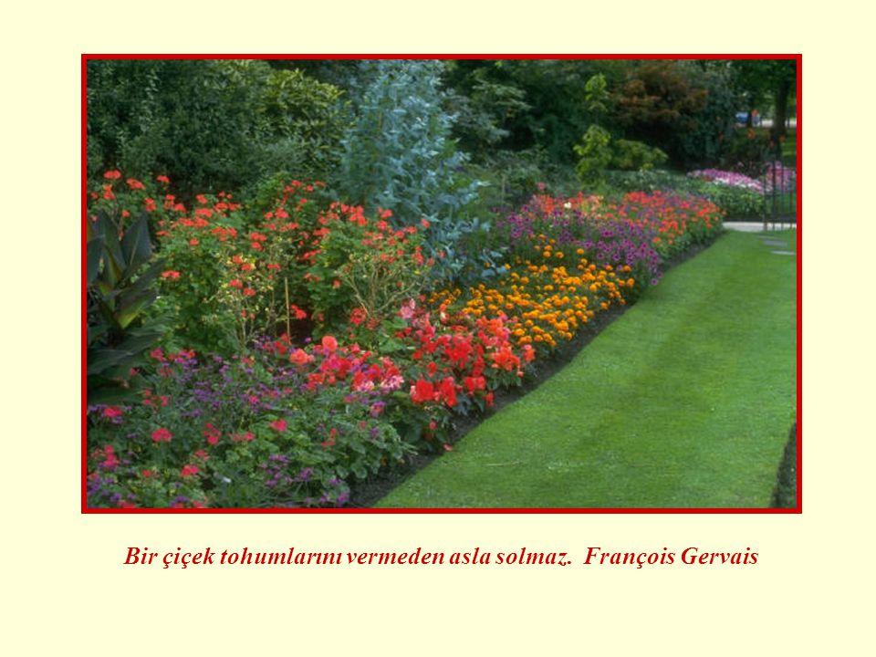 Bir çiçek tohumlarını vermeden asla solmaz. François Gervais