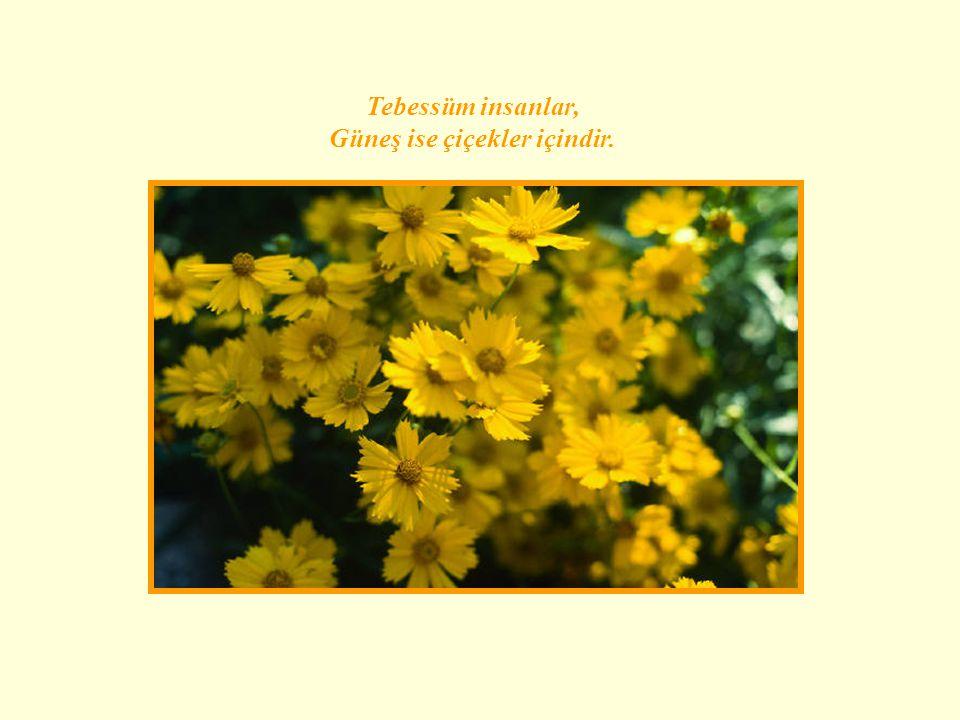 Güneş ise çiçekler içindir.