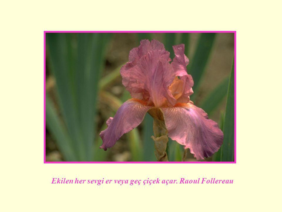 Ekilen her sevgi er veya geç çiçek açar. Raoul Follereau