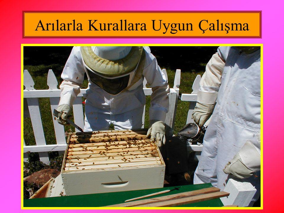 Arılarla Kurallara Uygun Çalışma