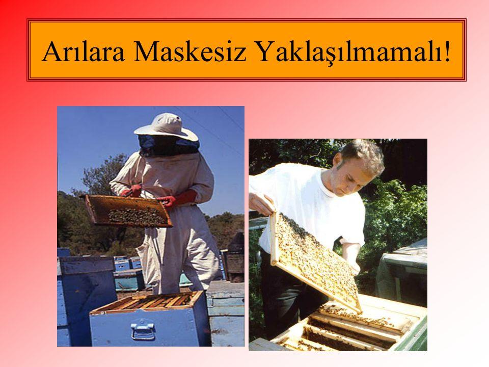 Arılara Maskesiz Yaklaşılmamalı!
