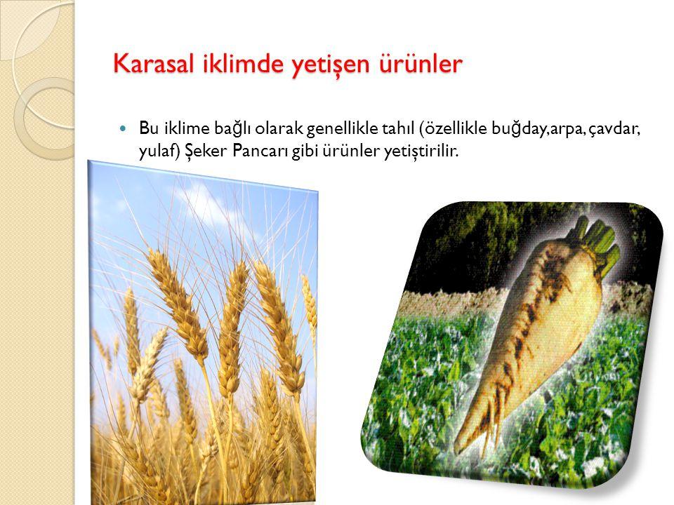 Karasal iklimde yetişen ürünler
