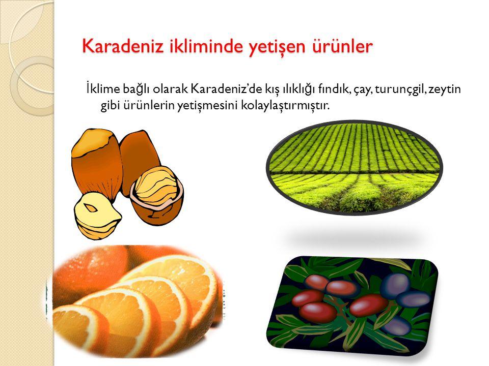 Karadeniz ikliminde yetişen ürünler