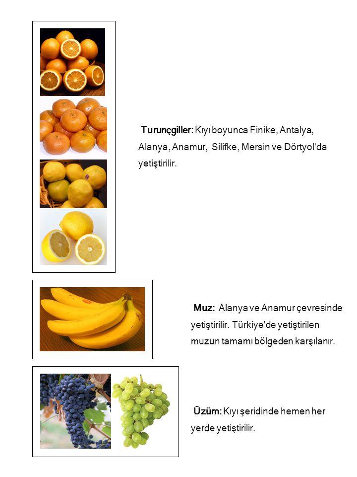 Turunçgiller: Kıyı boyunca Finike, Antalya, Alanya, Anamur, Silifke, Mersin ve Dörtyol da yetiştirilir.