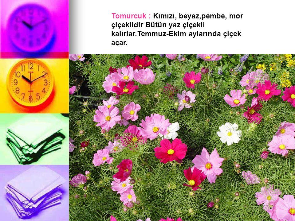 Tomurcuk : Kımızı, beyaz,pembe, mor çiçeklidir Bütün yaz çiçekli kalırlar.Temmuz-Ekim aylarında çiçek açar.