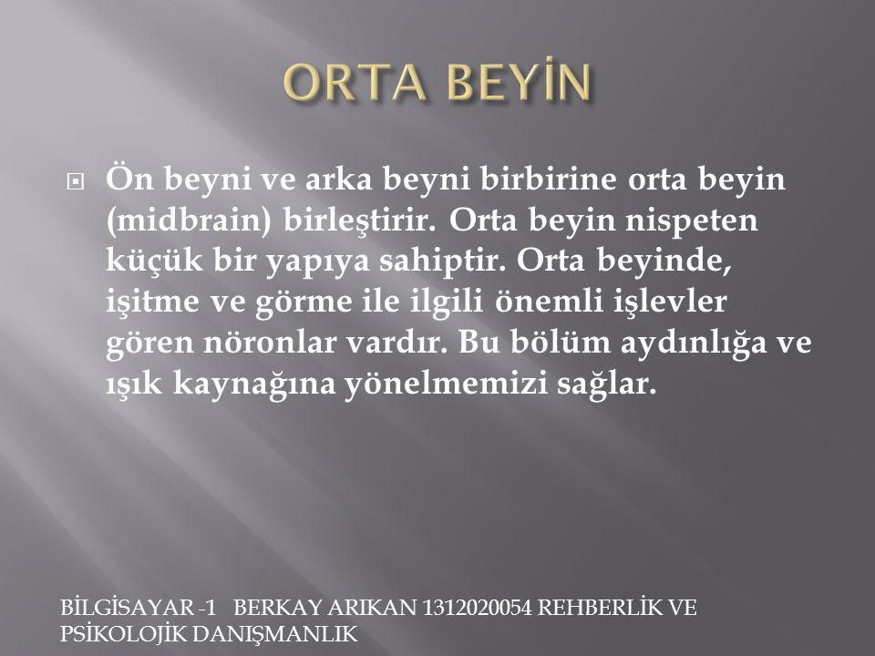 ORTA BEYİN