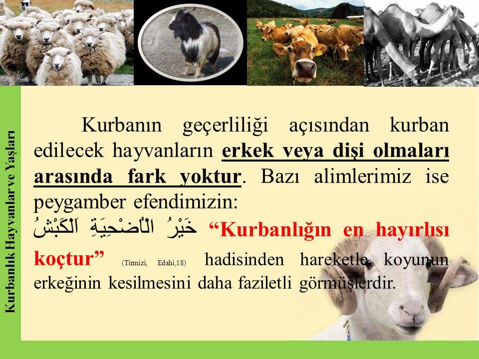 Kurbanlık Hayvanlar ve Yaşları Kurbanlık Hayvanlar ve Yaşları