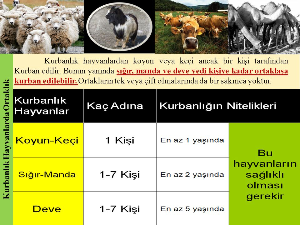 Kurbanlık Hayvanlarda Ortaklık