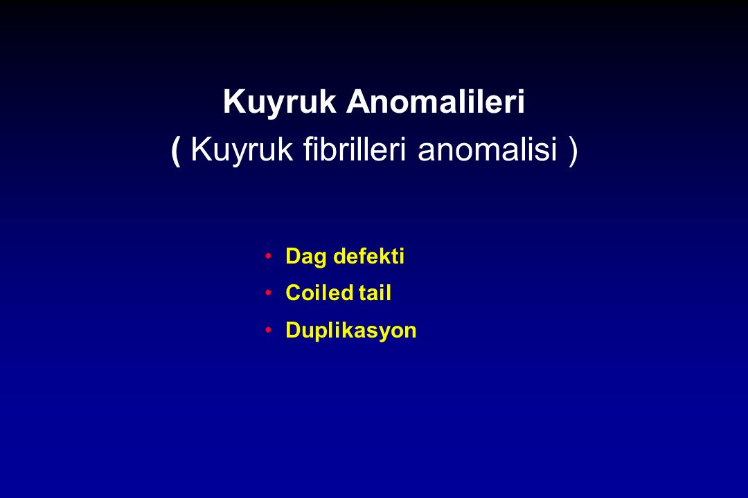Kuyruk Anomalileri ( Kuyruk fibrilleri anomalisi )