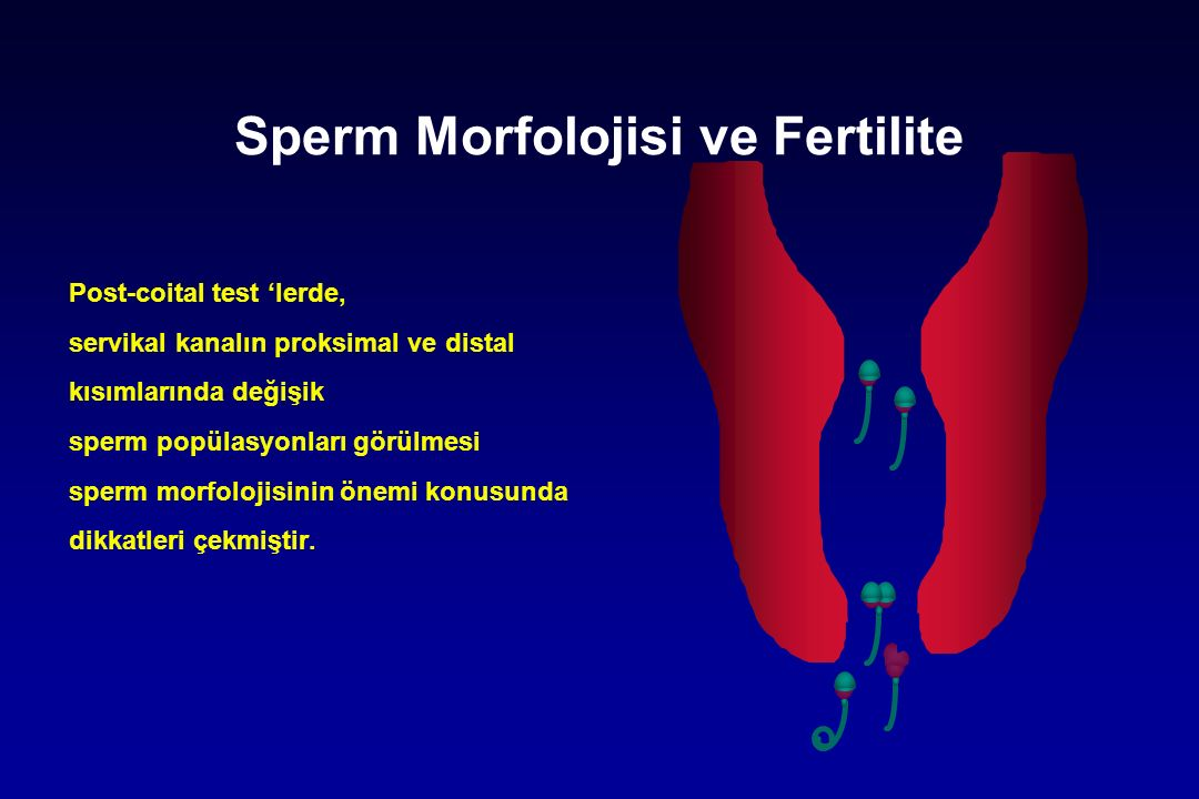 Sperm Morfolojisi ve Fertilite