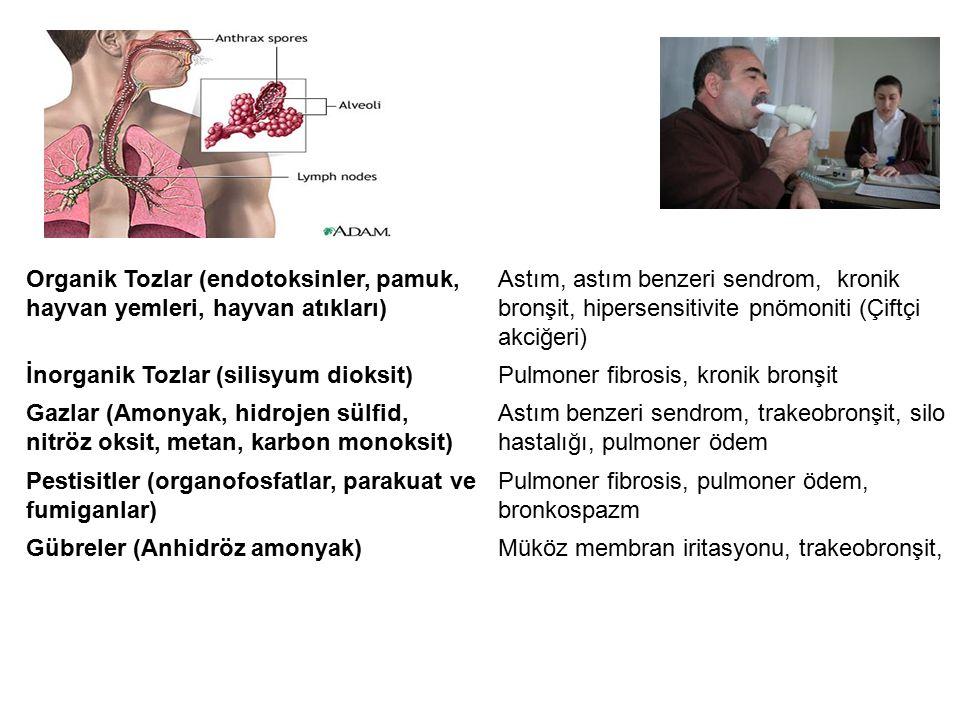 Akciğer Hastalıkları Organik Tozlar (endotoksinler, pamuk, hayvan yemleri, hayvan atıkları)