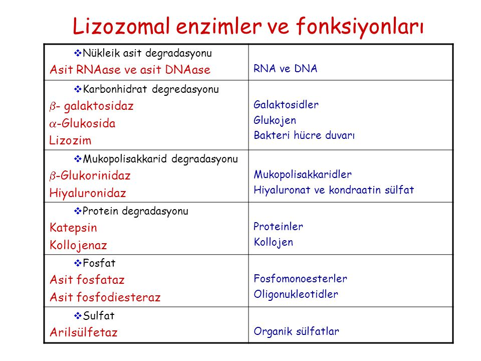 Lizozomal enzimler ve fonksiyonları