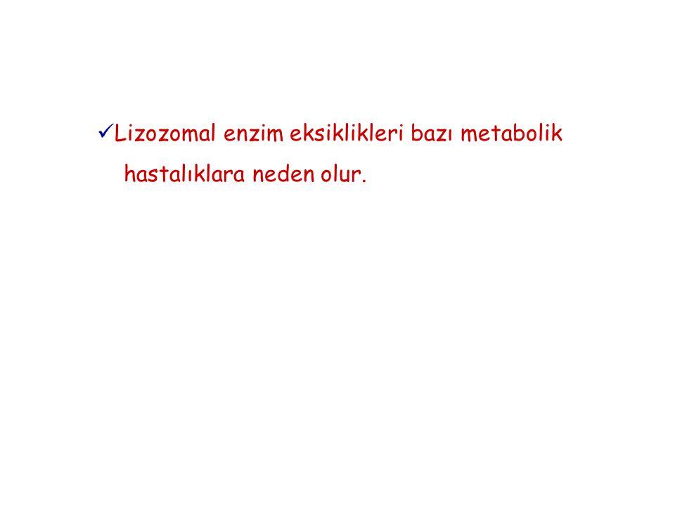 Lizozomal enzim eksiklikleri bazı metabolik