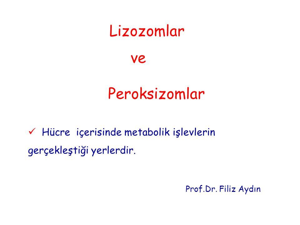 Lizozomlar ve Peroksizomlar Hücre içerisinde metabolik işlevlerin