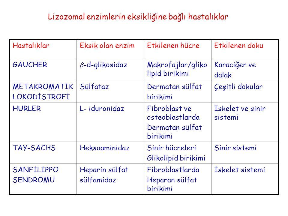 Lizozomal enzimlerin eksikliğine bağlı hastalıklar