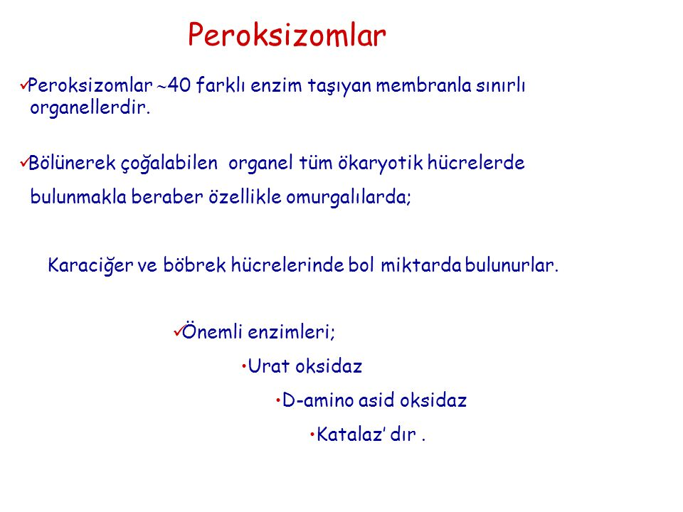 Peroksizomlar Peroksizomlar 40 farklı enzim taşıyan membranla sınırlı