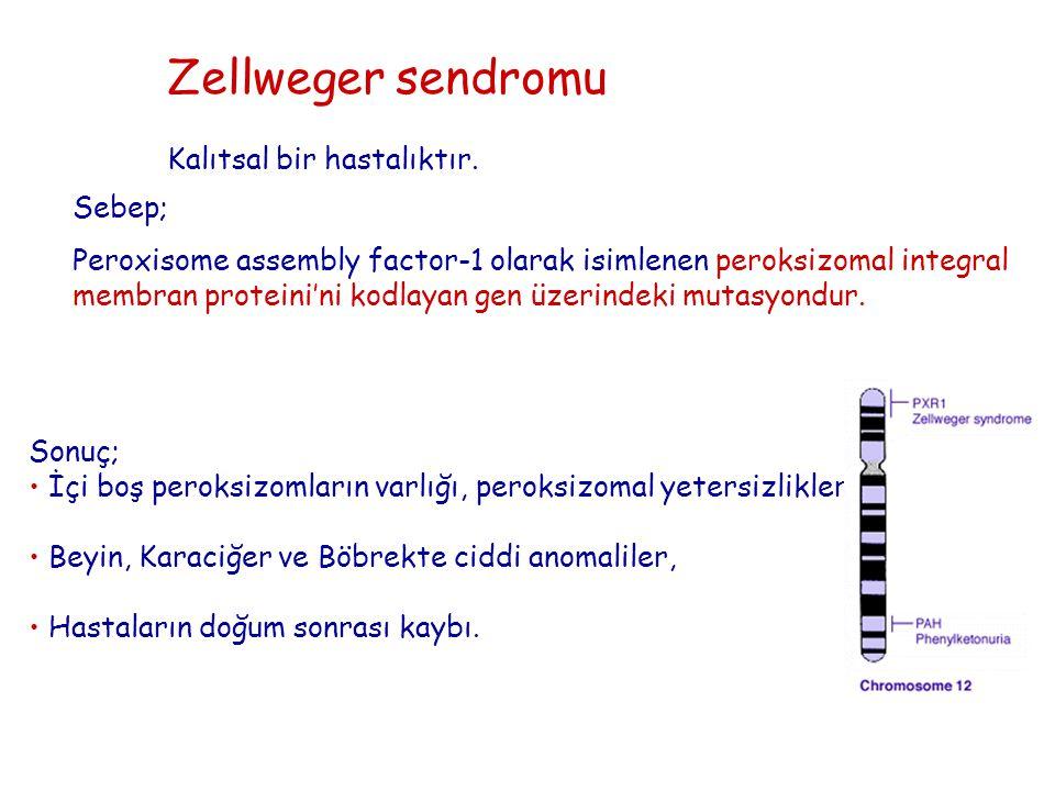Zellweger sendromu Kalıtsal bir hastalıktır. Sebep;