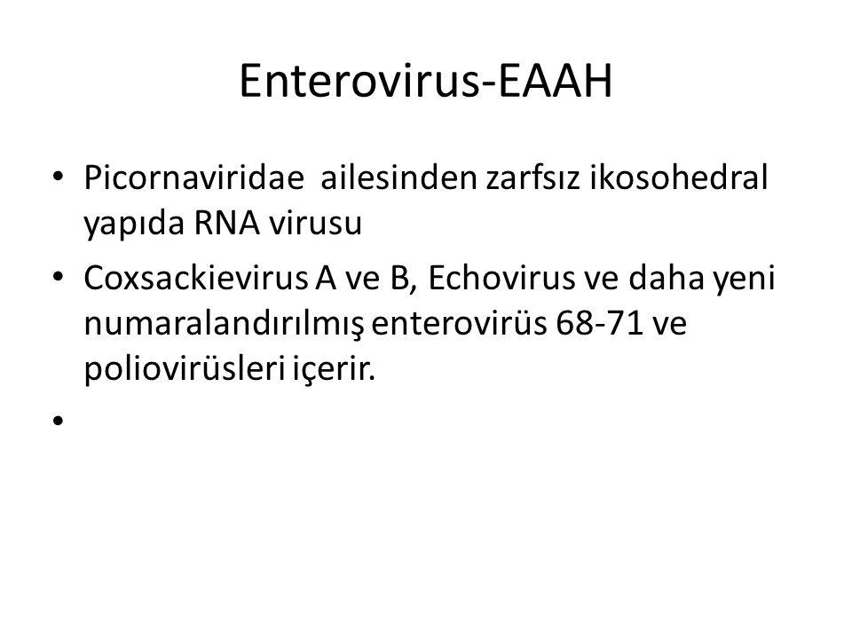 Enterovirus-EAAH Picornaviridae ailesinden zarfsız ikosohedral yapıda RNA virusu.
