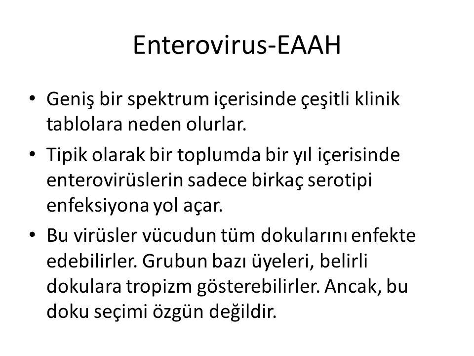 Enterovirus-EAAH Geniş bir spektrum içerisinde çeşitli klinik tablolara neden olurlar.