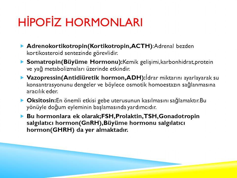 HİPOFİZ HORMONLARI Adrenokortikotropin(Kortikotropin,ACTH):Adrenal bezden kortikosteroid sentezinde görevlidir.