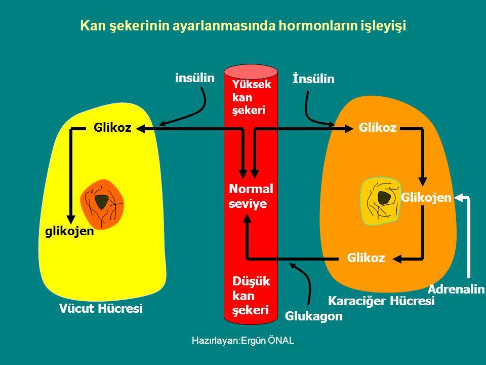 Kan şekerinin ayarlanmasında hormonların işleyişi