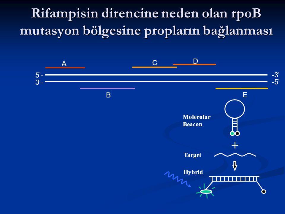 Rifampisin direncine neden olan rpoB mutasyon bölgesine propların bağlanması