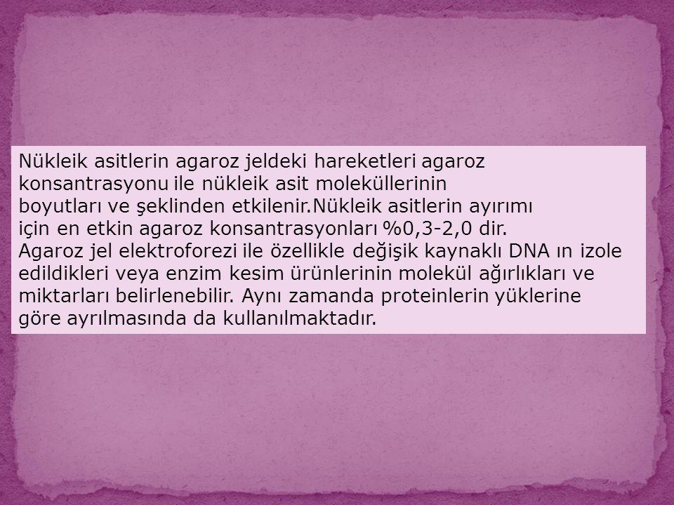 Nükleik asitlerin agaroz jeldeki hareketleri agaroz konsantrasyonu ile nükleik asit moleküllerinin