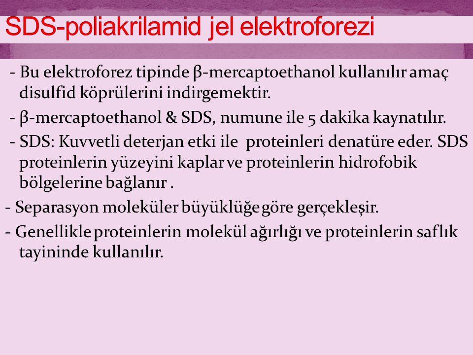 SDS-poliakrilamid jel elektroforezi