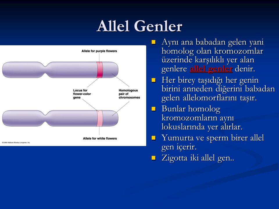 Allel Genler Aynı ana babadan gelen yani homolog olan kromozomlar üzerinde karşılıklı yer alan genlere allel genler denir.