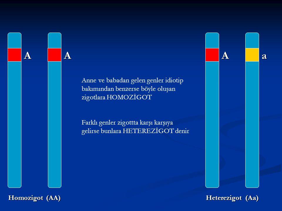 A A a Homozigot (AA) Heterezigot (Aa)