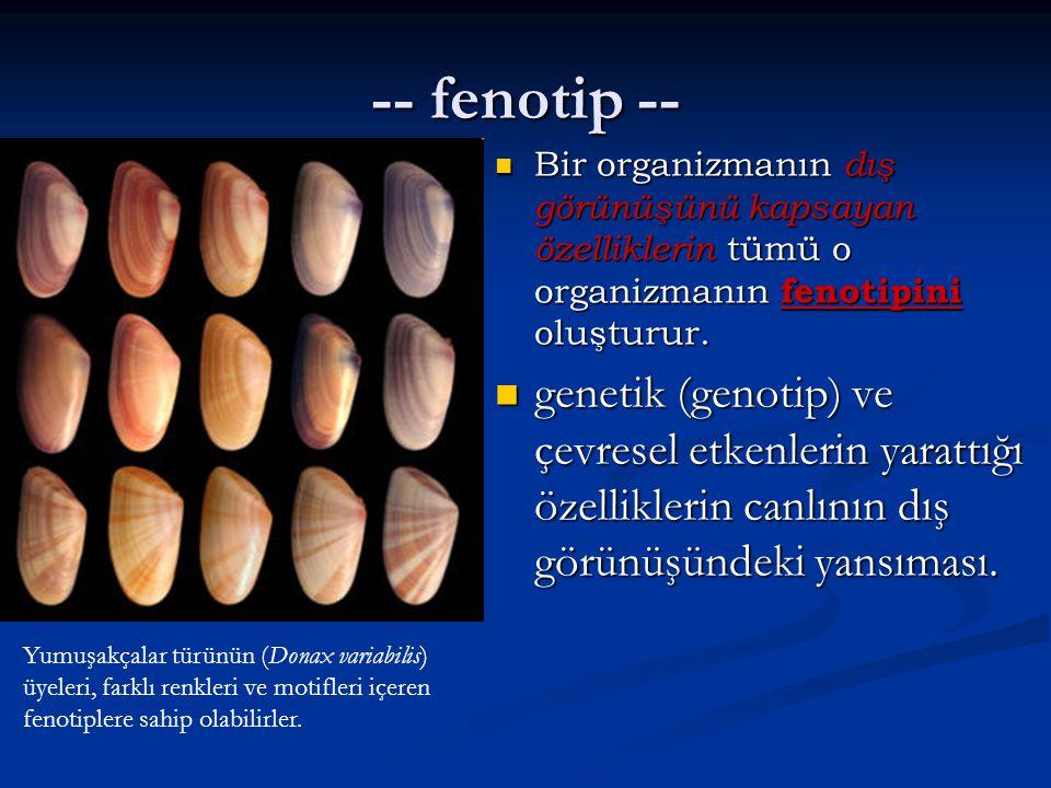 -- fenotip -- Bir organizmanın dış görünüşünü kapsayan özelliklerin tümü o organizmanın fenotipini oluşturur.