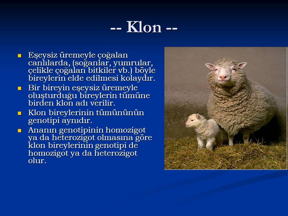 -- Klon -- Eşeysiz üremeyle çoğalan canlılarda, (soğanlar, yumrular, çelikle çoğalan bitkiler vb.) böyle bireylerin elde edilmesi kolaydır.