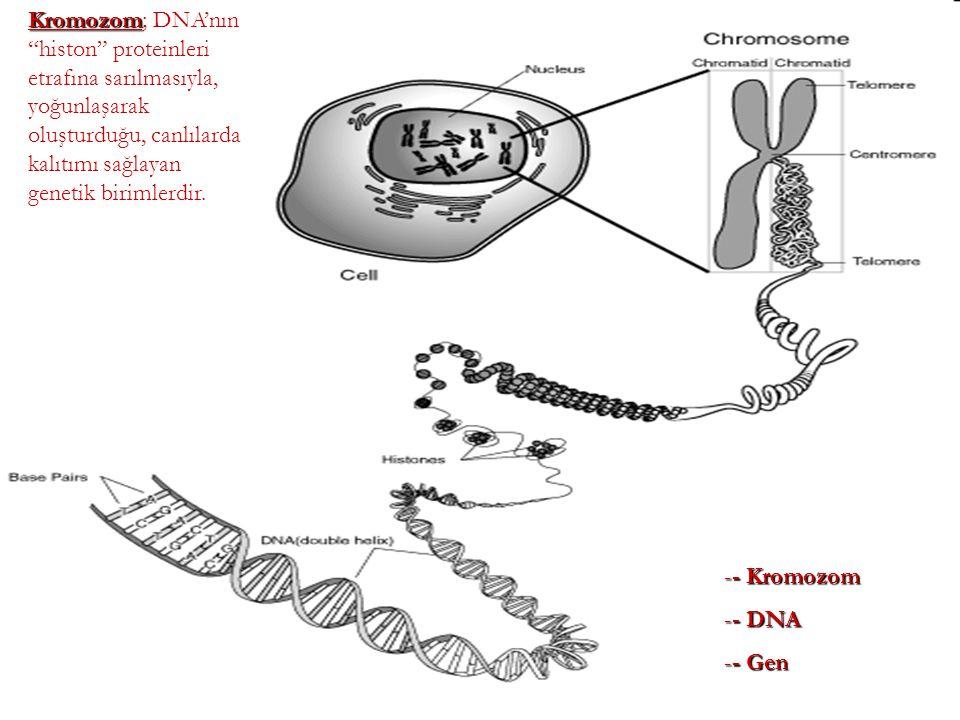 Kromozom; DNA'nın histon proteinleri etrafına sarılmasıyla, yoğunlaşarak oluşturduğu, canlılarda kalıtımı sağlayan genetik birimlerdir.