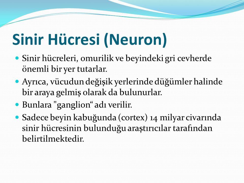 Sinir Hücresi (Neuron)