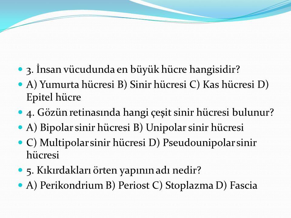 3. İnsan vücudunda en büyük hücre hangisidir