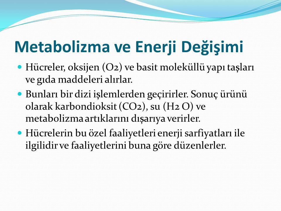 Metabolizma ve Enerji Değişimi