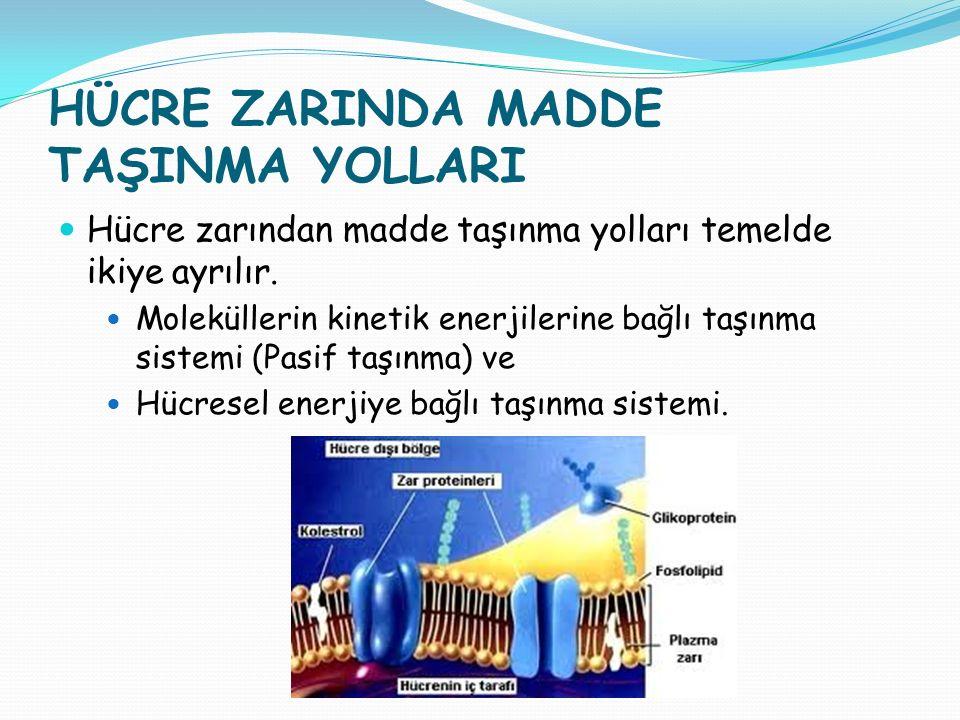HÜCRE ZARINDA MADDE TAŞINMA YOLLARI