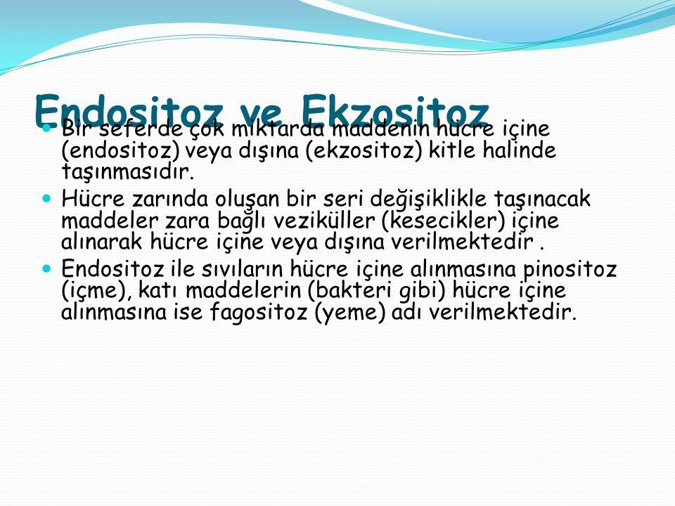 Endositoz ve Ekzositoz