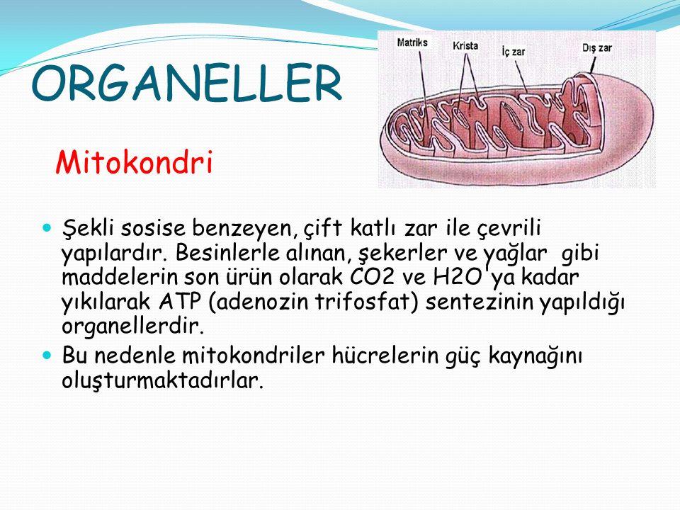 ORGANELLER Mitokondri