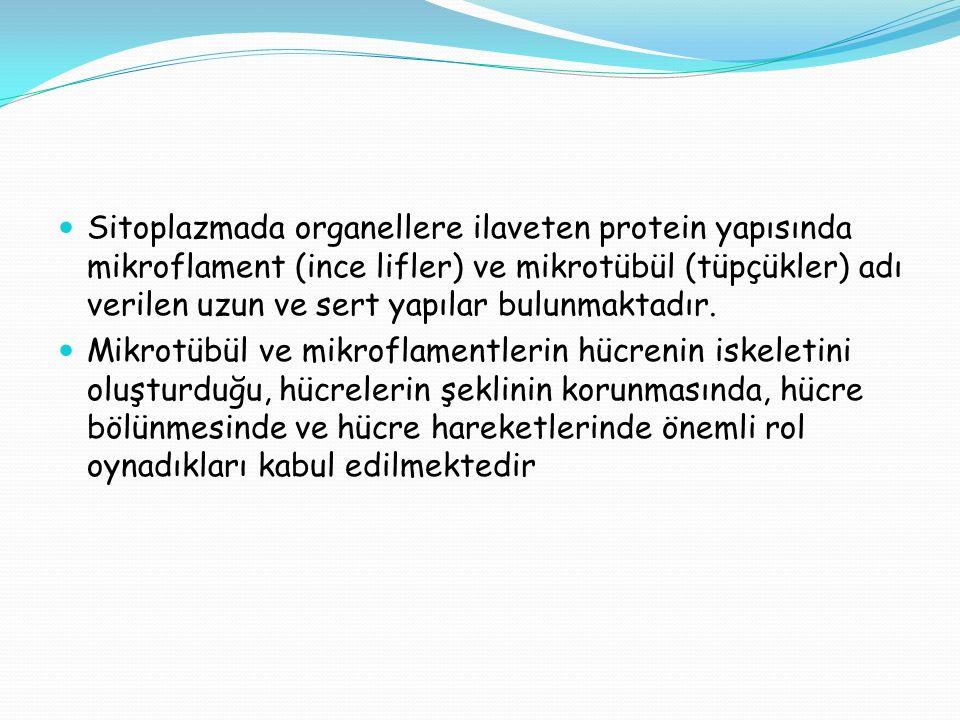 Sitoplazmada organellere ilaveten protein yapısında mikroflament (ince lifler) ve mikrotübül (tüpçükler) adı verilen uzun ve sert yapılar bulunmaktadır.