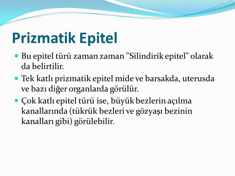 Prizmatik Epitel Bu epitel türü zaman zaman Silindirik epitel olarak da belirtilir.