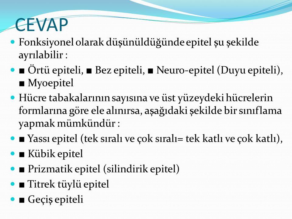 CEVAP Fonksiyonel olarak düşünüldüğünde epitel şu şekilde ayrılabilir : ■ Örtü epiteli, ■ Bez epiteli, ■ Neuro-epitel (Duyu epiteli), ■ Myoepitel.