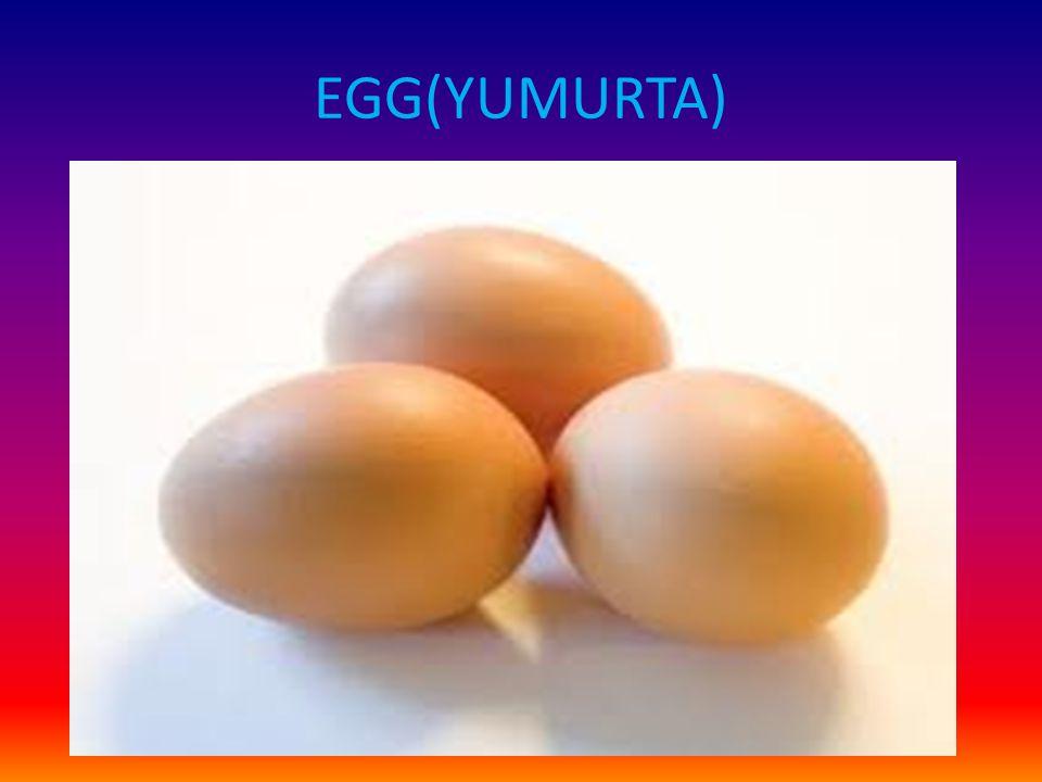 EGG(YUMURTA)