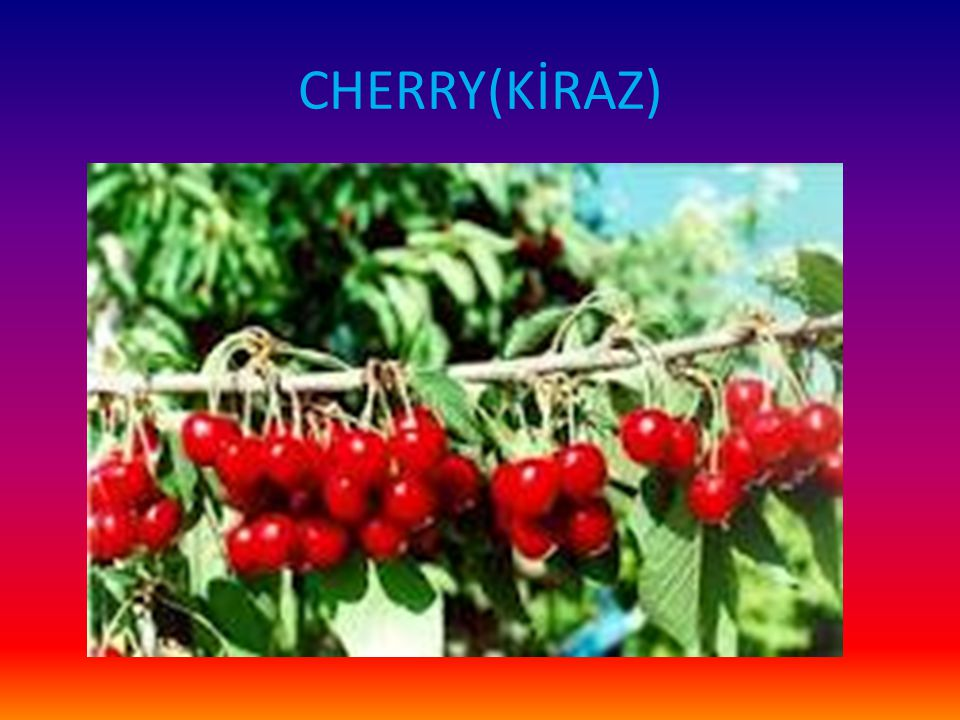 CHERRY(KİRAZ)